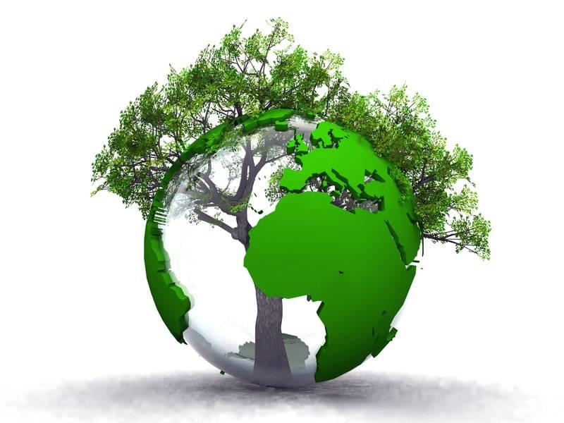 Terre Arbre Environnement