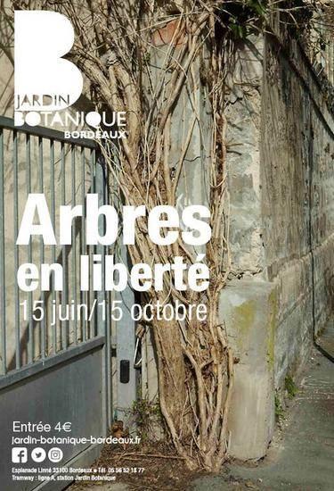 Bordeaux En Liberté. Et Les Arbres ! (?)